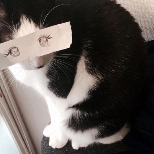 """""""Có ai biết mình là chú mèo dễ thương nhất quả đất không nhỉ?"""". (Ảnh: Internet)"""