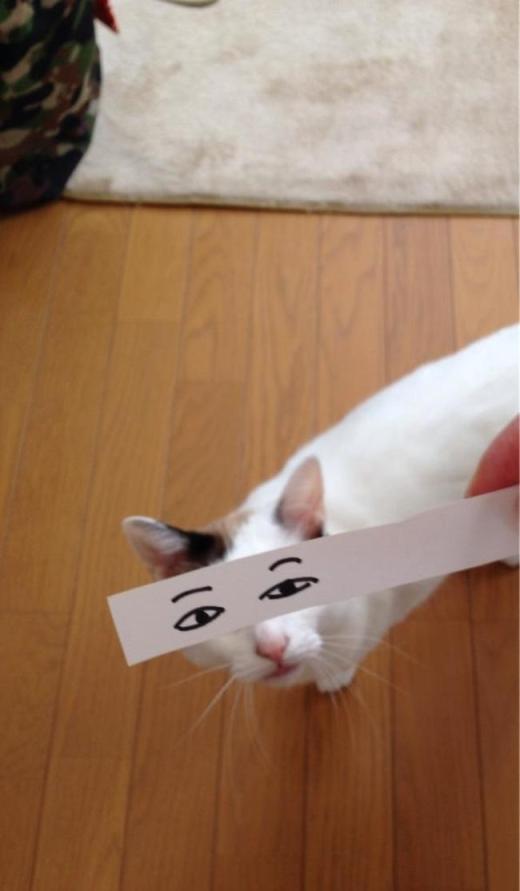 """Những """"khuôn mặt đáng thương"""" phiên bản mèo. (Ảnh: Internet)"""