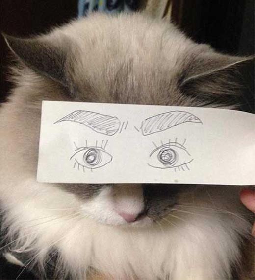 """""""Té ghế"""" với trào lưu vẽ-mắt-cho-mèo cực hài hước"""