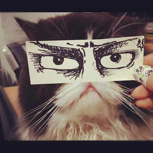 """""""Với đôi mắt này, mình sẽ soán ngôi chú mèo cau có bên Mỹ"""". (Ảnh: Internet)"""
