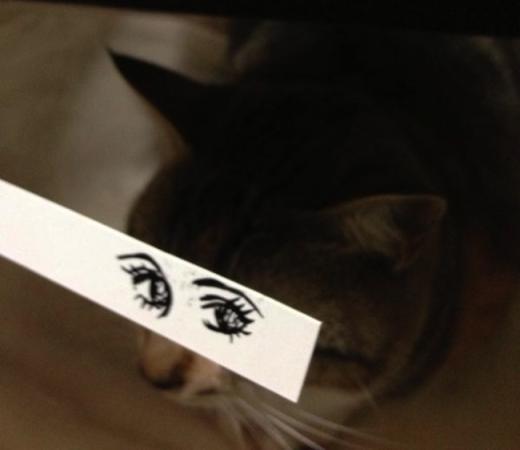"""""""Có lẽ mình là cô mèo xinh nhất hội rồi, vậy mới đượclàm vedette chứ!"""".(Ảnh: Internet)"""