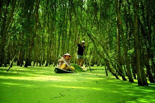 Một ngày nắng đẹp như tuyệt vời hơn khi đượcngồi ghe nhỏ lướt nhẹ trên mặt nước phủ kín những lá bèo li ti, xanh tươi, ngắm rừng tràm bủa vây bốn bề, đâu đó có tiếng chim hót ríu rít. (Nguồn: Internet)