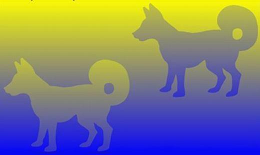 Tương tự, hai chú chó này có màu sắc khác nhau, thậm chí là đối lập. Nhưng thực chất là do màu vàng và xanh dương làm mắt chúng ta phân tích sai. (Ảnh Internet)