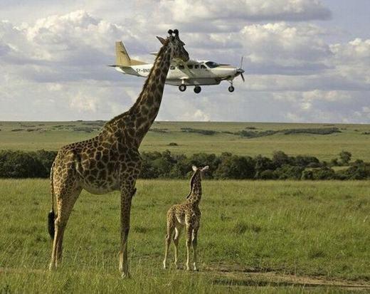 """""""Để bố lấy chiếc máy bay này về cho con chơi nhé!"""" (Ảnh: Internet)"""
