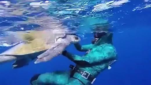 Xúc động với những khoảnh khắc con người quên mình vì loài vật