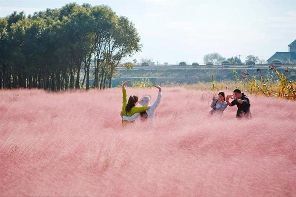 Cánh đồng cỏ này rộng 1,87 hecta, nằm ở huyệnJinshan, Thượng Hải, Trung Quốc.