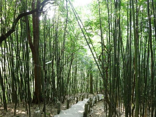 Con đường xuyên qua rừng trúc để lên đềnBà Chúa Thượng Ngàn.(Ảnh: Internet)