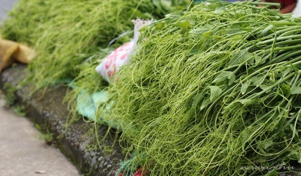 Su su - loại hoa màu đặc trưng, nổi tiếng ở Tam Đảo. (Ảnh: Internet)