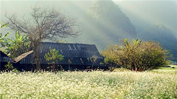Mộc Châu nên thơ những mùa hoa nở rộ. (Ảnh: Internet)