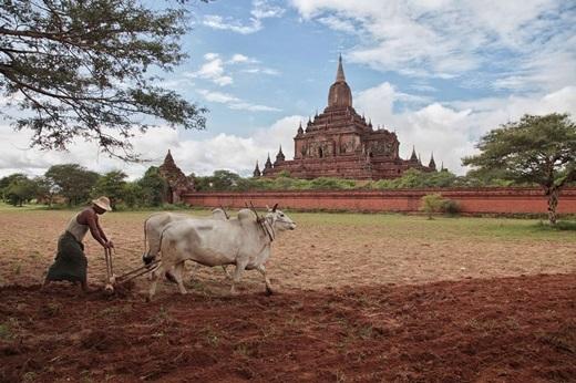 Và cuối cùng, giấc mơ trưa ởBagan, Myanmar sẽ êm dịu như thế này.(Nguồn Internet)