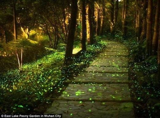 Đây là công viên duy nhất trên thế giới dành cho các động vật phát sáng. Theo thống kê, nơi đây có tới hơn 10.000 con đom đóm thuộc nhiều loài khác nhau. (Ảnh: Internet)