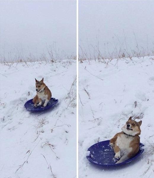 """""""Trượt tuyết không vui như mình tưởng"""". (Nguồn: Internet)"""
