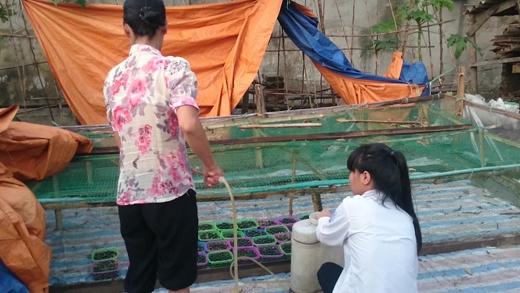 Hai mẹ con thuê một phòng trọ ở xóm chạy thận dưới Thanh Trì, hàng ngày tranh thủ trồng rau mầm thuê cho một trung tâm cứu hộ chó mèo.