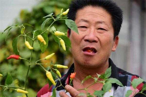 Kinh ngạc dị nhân ăn 2,5 kg ớt mỗi ngày