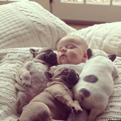 Thấy cậu chủ nhà mình ấm áp, cả một bầy chó Bulldog con leo lên xin ngủ cùng.