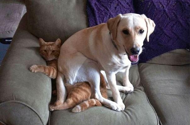 """""""Đừng có trách tui, tui vốn rất ghét mèo"""".(Ảnh: Internet)"""