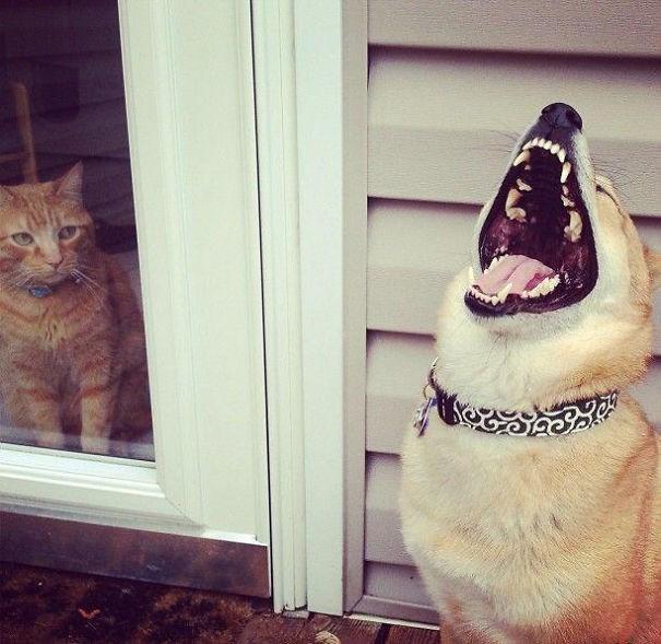 """""""Hahaha, bị nhốt rồi nhé..."""".(Ảnh: Internet)"""