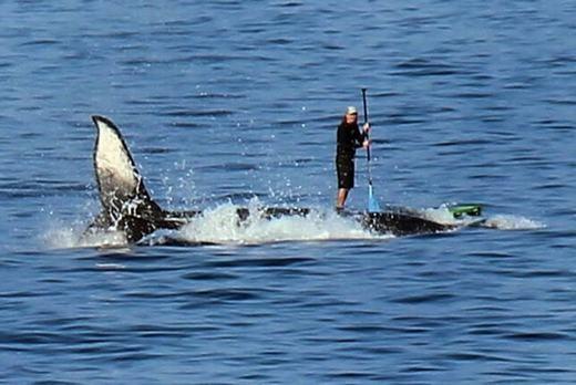 Một con cá voi đã được khách du lịch dùng làm… thuyền trên biển Kailua-Kona, Hawaii. Theo tìm hiểu, vị khách đó có tênMark Jackson và David Warren(65 tuổi) là người đã chụp lại cảnh này khiđang ngắm cảnh trên ban công. (Ảnh: Internet)