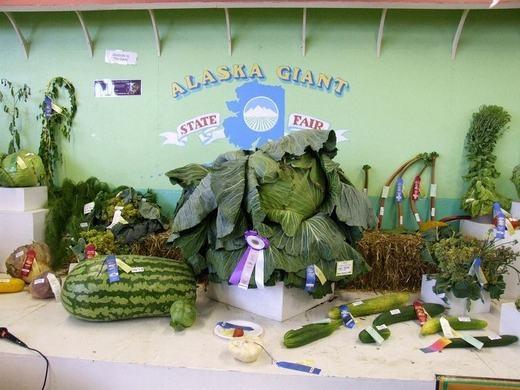 Góc trưng bày của một hộ nông dân. (Ảnh:Amusing Planet)