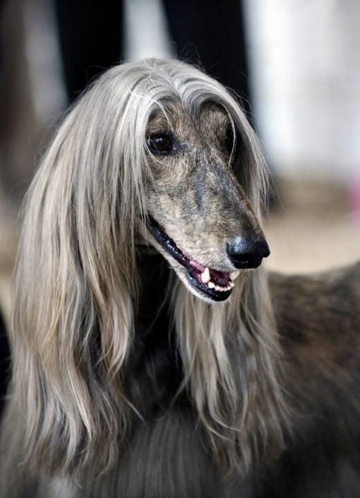 """""""Đúng rồi, tóc này mới là 'mô-đen'!"""". (Ảnh: Internet)"""