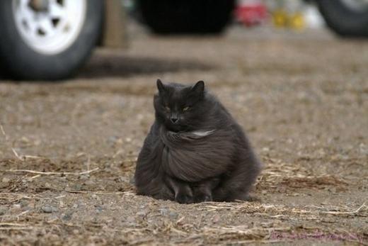 Cô mèo cực ngầu, đi chơi Halloween không cần hóa trang. (Ảnh: Internet)