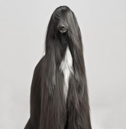 """Phì cười trước """"đầu tóc mô-đen"""" siêu đáng yêu của động vật"""