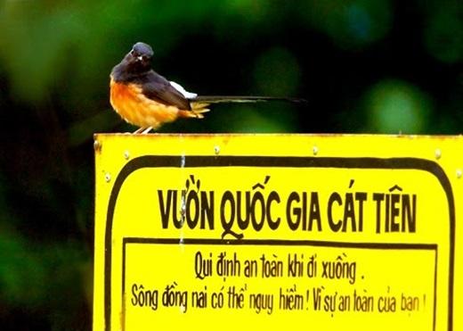 Không khó để đến được vườn quốc gia Nam Cát Tiên. Từ Sài Gòn đến đây mất khoảng 4 tiếng, bạn chỉ cần đi theo Quốc lộ 1 tới ngã ba Dầu Giây, đi tiếp theo đường Quốc lộ 20, qua huyện Định Quán rồi sẽ đến được địa phận huyện Tân Phú.(Nguồn: Internet)