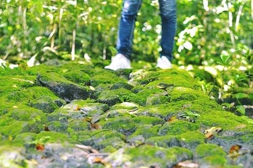 … được đi trên những phiến đá phủ đầy rêu xanh trơn trượt…(Nguồn: Internet)