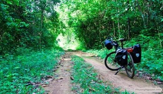 Còn gì thú vị hơn được thong dong đạp xe trên con đường đất gồ ghề, cây cối chở che trên đầu, tiếng chim rừng ríu rít không ngưng nghỉ?(Nguồn: Internet)