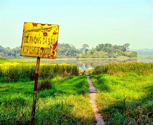 Và đừng quên ghé thăm Bàu Sấu – tuyến tham quan nổi tiếng nhất ở vườn quốc gia Nam Cát Tiên. Để đến được nơi này, đầu tiên bạn phải di chuyển bằng xe jeep khoảng 10km rồi đi bộ thêm 5km nữa.(Nguồn: Internet)