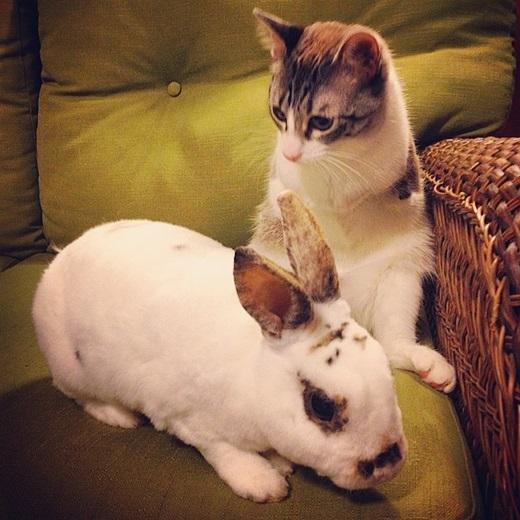 """Roux cùng """"em họ"""" – thỏ Kangaroo.(Nguồn: Bored Panda)"""