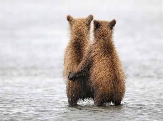 """""""Ngày xưa anh có hẹn hò với một cô gấu ở đây, anh hỏi có yêu anh không, nó bảo không, thế là anh xô nó xuống đến giờ vẫn chưa thấy nổi lên! Vậy em có yêu anh không?"""". (Ảnh: Internet)"""