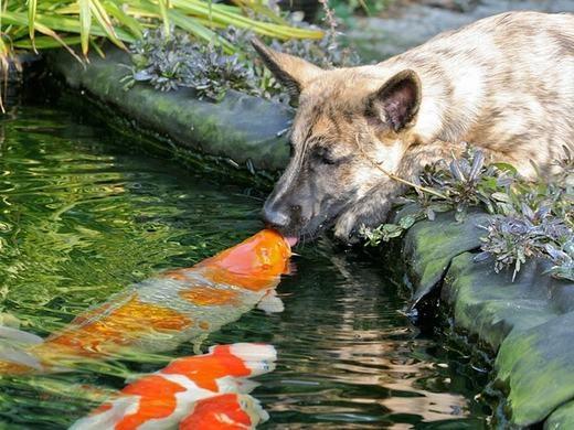 GATO trước những cảnh yêu nhau mùi mẫn của động vật