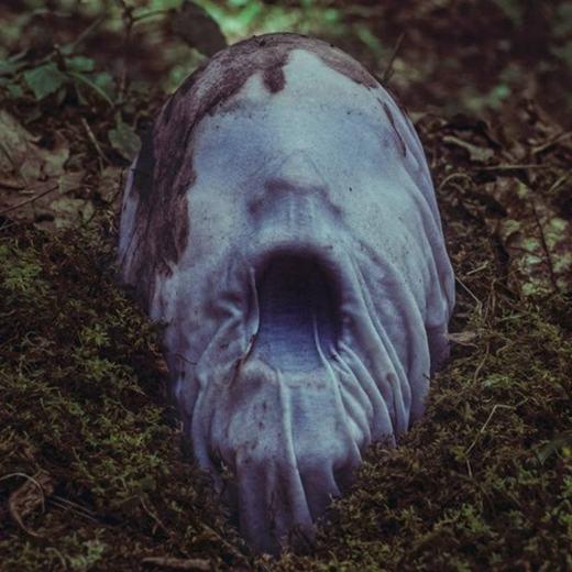 Nếu một ngày, bạn vào rừng vắng và thấy chiếc đầu đang từ từ dưới bụi cỏ chui lên… (Ảnh: Internet)