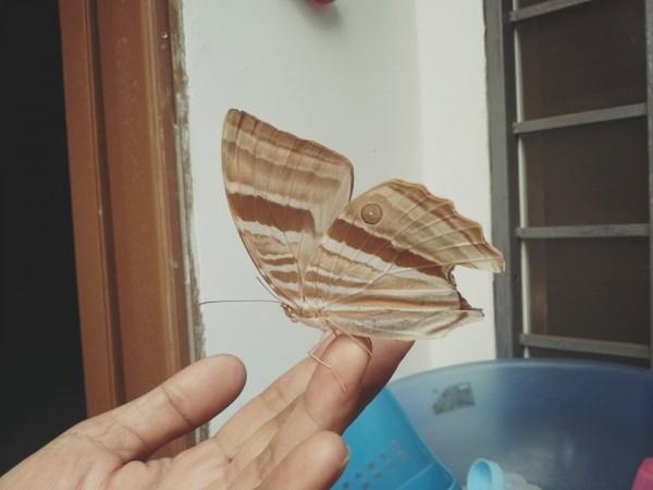 Chú bướm rất gần gũi với những người có mặt trong buổi sinh nhật này - Tin sao Viet - Tin tuc sao Viet - Scandal sao Viet - Tin tuc cua Sao - Tin cua Sao