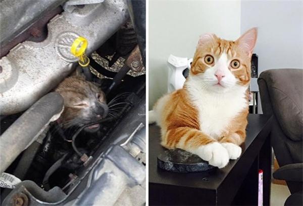 Một tai nạn đã khiến chú mèomắc kẹt và vô cùng đau đớn. Thế nhưng,trải qua bao vất vả, em mèođã được thương yêu, chăm sóc vàkhỏe mạnh, dễ thương hơn bao giờ hết.(Ảnh Internet)