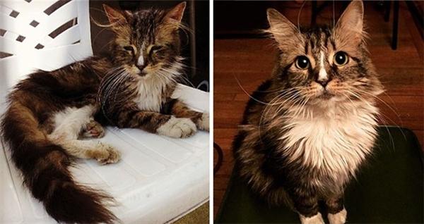 Sự lột xác bất ngờ của những chú mèo hoang tội nghiệp