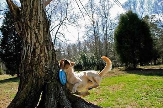 """""""Ơ cái cây này, thấy ta chạy tới sao không tìm đường mà tránh ra hả?"""".(Ảnh: Innamag)"""