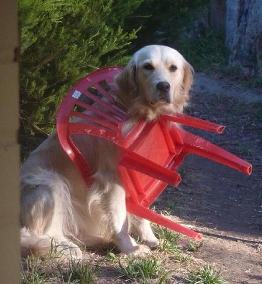 """""""Nói một cách lạc quan thì từ giờem có thể ngồi trên ghế mọi lúc mọi nơi"""".(Ảnh: Innamag)"""