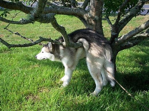 """""""Có lẽ mình đã quá tự tin vào bản thân khi nghĩ rằng có thể dễ dàng trèo qua cái cây này"""".(Ảnh: Innamag)"""