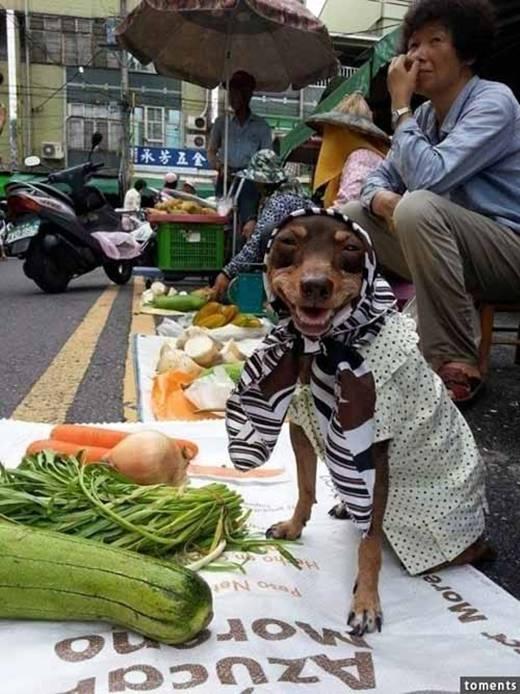 """""""Ai mua bí, mua rau cho em nào"""".(Ảnh: Internet)"""