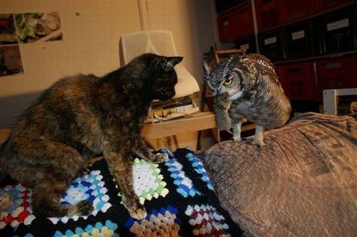 Cảm động cú mèo tặng quà trả ơn sau 4 năm được cứu