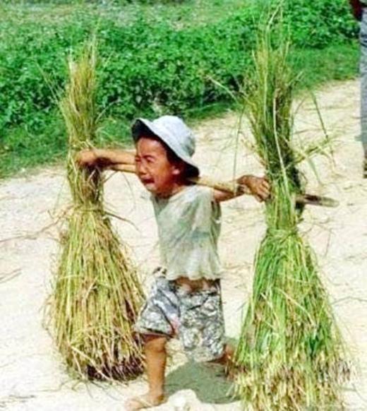 Gánh lúa nặng trĩu trên đôi vai bé nhỏ của em. Tiếng khóc ấy, hình ảnh ấy có làm bạn thấy nhói lòng? (Ảnh: Internet)