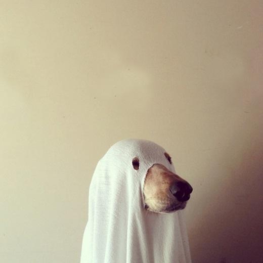 Chân dung của kẻ lười nhưng vẫn muốn hòa vào không khí Halloween.(Ảnh: Diply)