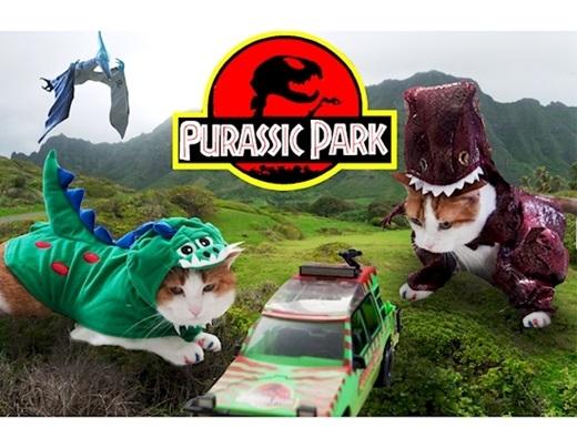 """""""Vấn đề không nằm ở chỗ chúng tôi là mèo hay khủng long. Vấn đề là chúng tôi quá sức 'tuyệt vời ông mặt trời' trong bộ đồ hóa trang này"""". (Ảnh: Diply)"""