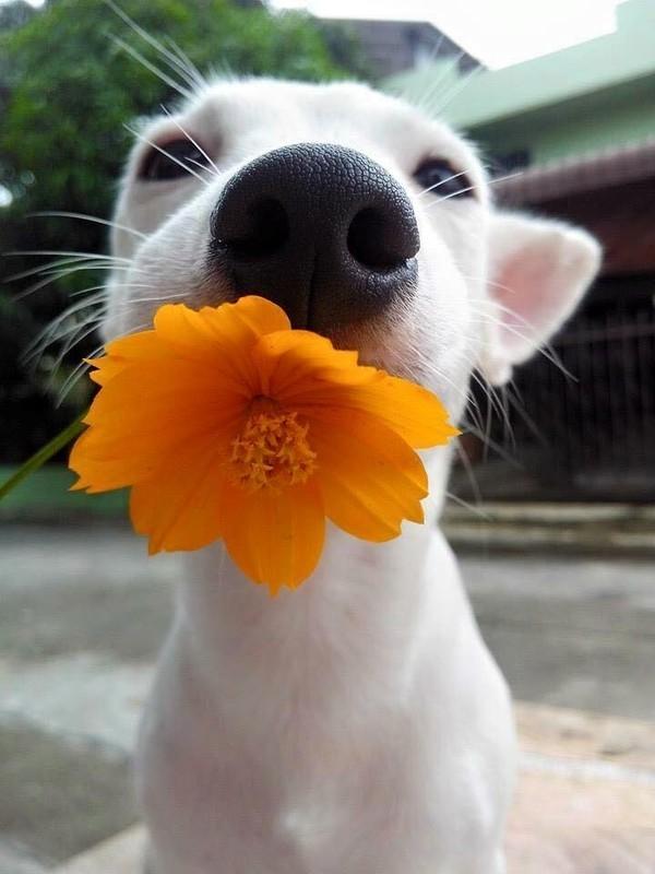 Ban cho một bông hoa nè. (Nguồn: Internet)