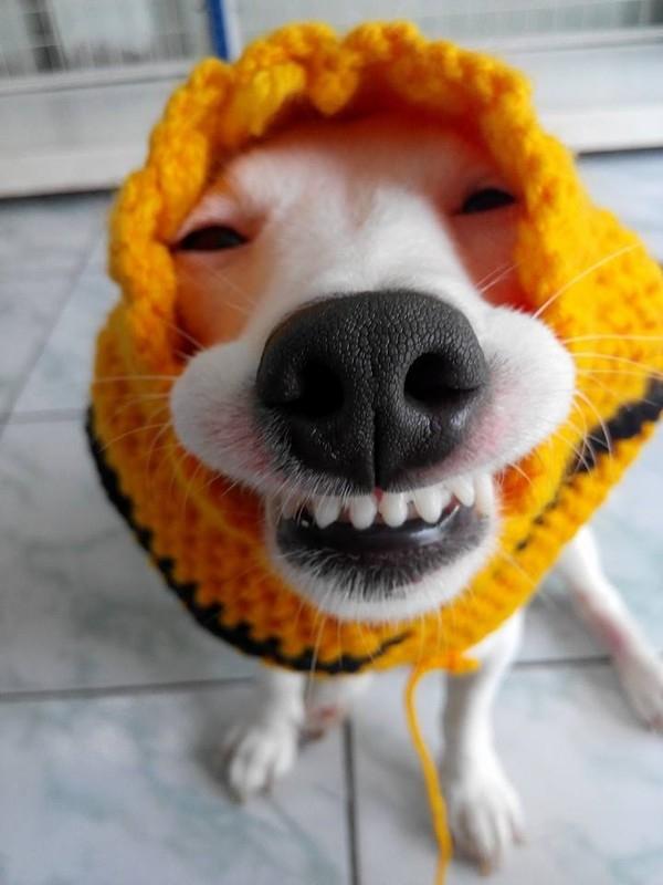 Mê mệt trước biểu cảm khó đỡ của chú chó gây sốt cộng đồng mạng