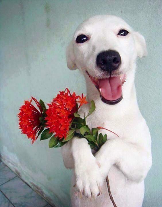 """""""Ngại quá, người hâm mộ cứ tặng hoa suốt..."""". (Nguồn: Internet)"""