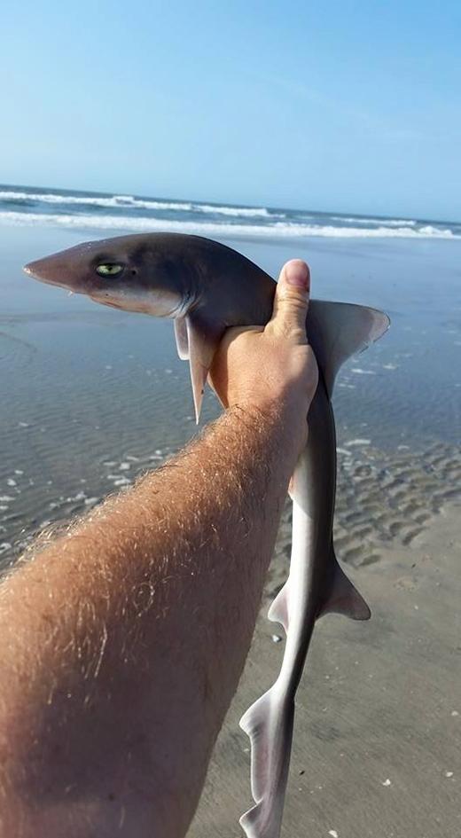 """Vẻ mặt """"bất cần đời"""" của chúa tể đại dương khi bị """"hốt"""" lên bờ.(Nguồn: Internet)"""