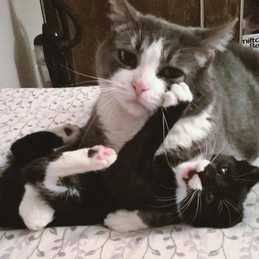 Nỗi khổ của một ông bố bị bắt chăm con nhỏ.(Nguồn: Internet)
